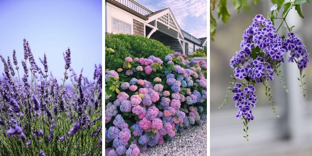 12 arbustes à fleurs violettes qui embelliront votre jardin