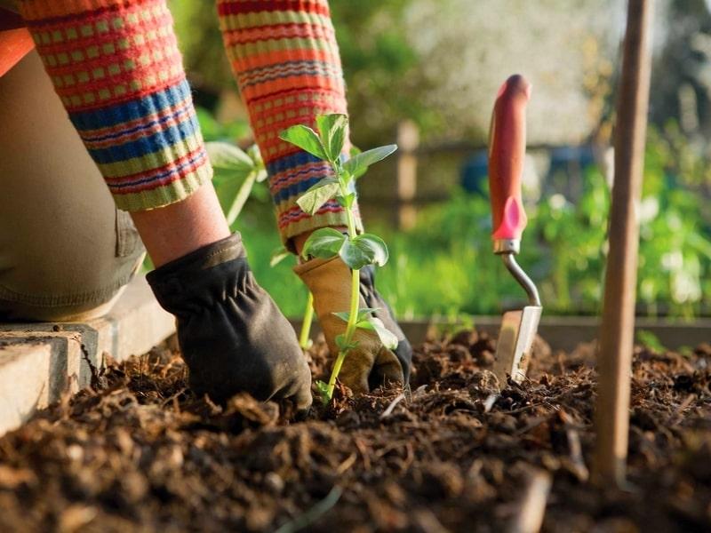 19 raccourcis de jardinage qui permettent d'économiser du temps, de l'argent et des efforts