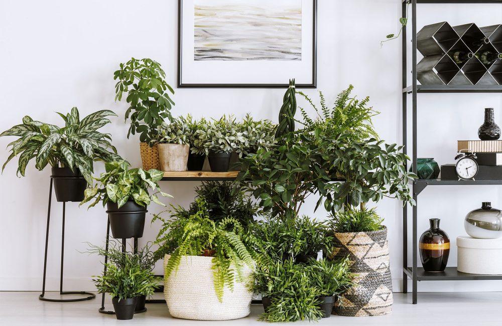 6 Conseils d'experts pour créer un jardin intérieur