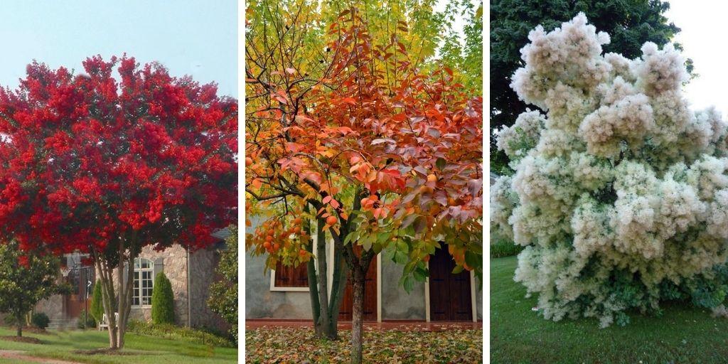 7 Favoris d'arbres de cour avant