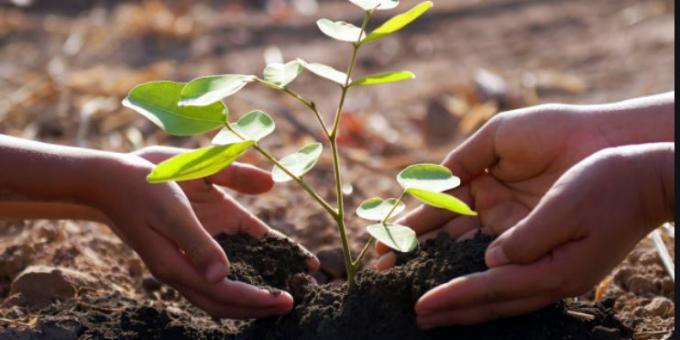 Quelle est la meilleure période de l'année pour planter des arbustes?
