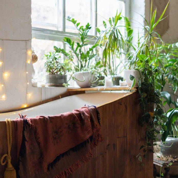 7 plantes qui aiment l'humidité pour votre salle de bain